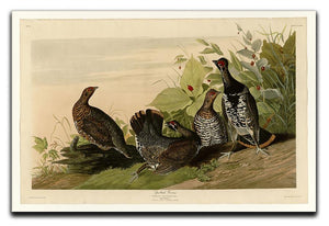 Spotted Grouse by Audubon Canvas Print or Poster - Canvas Art Rocks - 1