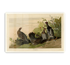 Spotted Grouse by Audubon HD Metal Print - Canvas Art Rocks - 1