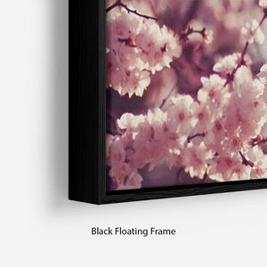 Spring Cherry blossoms Floating Frame Canvas