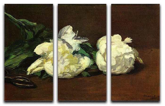 Still life White Peony by Manet 3 Split Panel Canvas Print