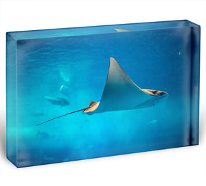 Stingray in the aquarium Acrylic Block - Canvas Art Rocks - 1