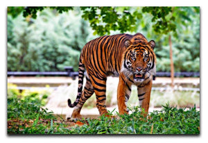Sumatran Tiger Print - Canvas Art Rocks - 1