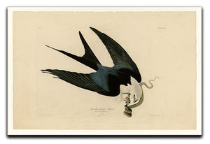 Swallow tailed Hawk by Audubon Canvas Print or Poster - Canvas Art Rocks - 1