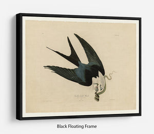 Swallow tailed Hawk by Audubon Floating Frame Canvas - Canvas Art Rocks - 1