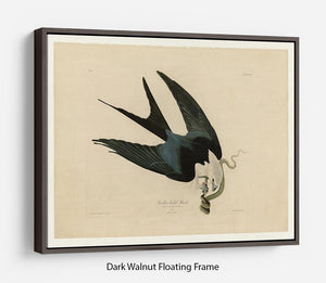 Swallow tailed Hawk by Audubon Floating Frame Canvas - Canvas Art Rocks - 5