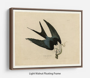 Swallow tailed Hawk by Audubon Floating Frame Canvas - Canvas Art Rocks 7
