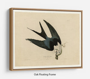 Swallow tailed Hawk by Audubon Floating Frame Canvas - Canvas Art Rocks - 9