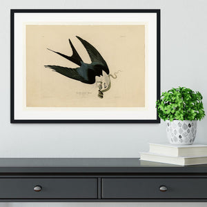 Swallow tailed Hawk by Audubon Framed Print - Canvas Art Rocks - 1