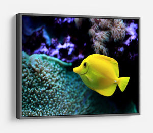 The yellow fish HD Metal Print