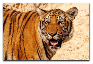 Tiger In The Heat Print - Canvas Art Rocks - 1