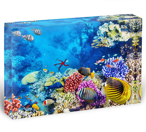 Tropical fish Acrylic Block - Canvas Art Rocks - 1