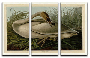 Trumpeter_Swan by Audubon 3 Split Panel Canvas Print - Canvas Art Rocks - 1