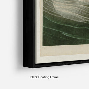Trumpeter Swan by Audubon Floating Frame Canvas - Canvas Art Rocks - 2