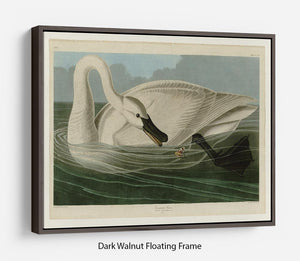 Trumpeter Swan by Audubon Floating Frame Canvas - Canvas Art Rocks - 5