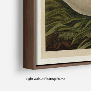 Trumpeter_Swan by Audubon Floating Frame Canvas - Canvas Art Rocks - 8