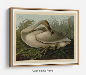 Trumpeter_Swan by Audubon Floating Frame Canvas - Canvas Art Rocks - 9