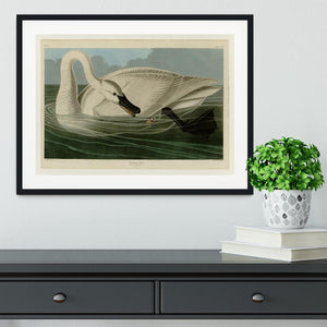Trumpeter Swan by Audubon Framed Print - Canvas Art Rocks - 1
