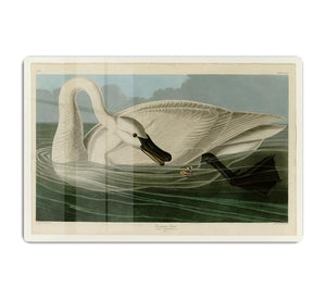 Trumpeter Swan by Audubon HD Metal Print - Canvas Art Rocks - 1