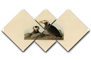 Tufted Auk by Audubon 4 Square Multi Panel Canvas - Canvas Art Rocks - 1