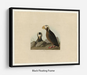 Tufted Auk by Audubon Floating Frame Canvas - Canvas Art Rocks - 1