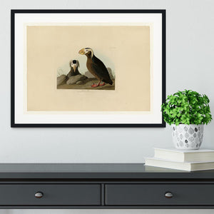 Tufted Auk by Audubon Framed Print - Canvas Art Rocks - 1