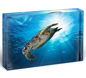 Turtle dive Acrylic Block - Canvas Art Rocks - 1