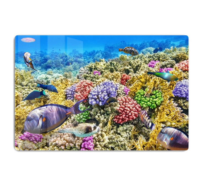 Underwater world with corals and tropical fish HD Metal Print