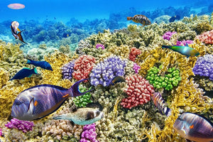 Underwater world with corals and tropical fish Wall Mural Wallpaper - Canvas Art Rocks - 1