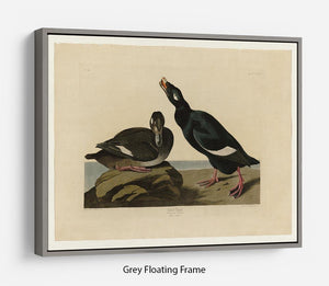 Velvet Duck by Audubon Floating Frame Canvas - Canvas Art Rocks - 3