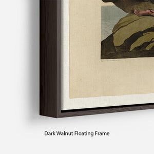 Velvet Duck by Audubon Floating Frame Canvas - Canvas Art Rocks - 6