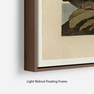 Velvet Duck by Audubon Floating Frame Canvas - Canvas Art Rocks - 8