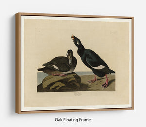 Velvet Duck by Audubon Floating Frame Canvas - Canvas Art Rocks - 9