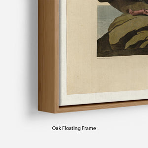 Velvet Duck by Audubon Floating Frame Canvas - Canvas Art Rocks - 10