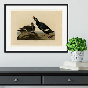 Velvet Duck by Audubon Framed Print - Canvas Art Rocks - 1