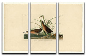 Virginia Rail by Audubon 3 Split Panel Canvas Print - Canvas Art Rocks - 1