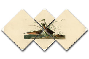 Virginia Rail by Audubon 4 Square Multi Panel Canvas - Canvas Art Rocks - 1
