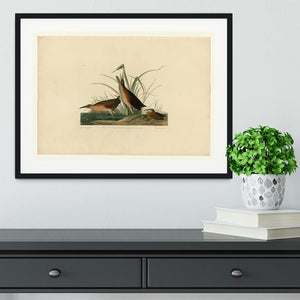 Virginia Rail by Audubon Framed Print - Canvas Art Rocks - 1