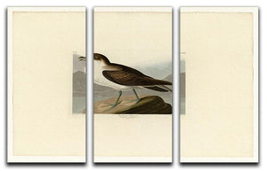 Wandering Shearwater by Audubon 3 Split Panel Canvas Print - Canvas Art Rocks - 1