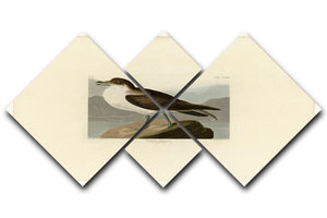 Wandering Shearwater by Audubon 4 Square Multi Panel Canvas - Canvas Art Rocks - 1