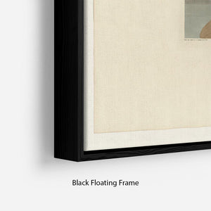 Wandering Shearwater by Audubon Floating Frame Canvas - Canvas Art Rocks - 2