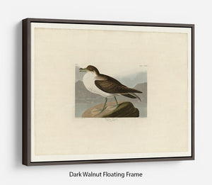 Wandering Shearwater by Audubon Floating Frame Canvas - Canvas Art Rocks - 5