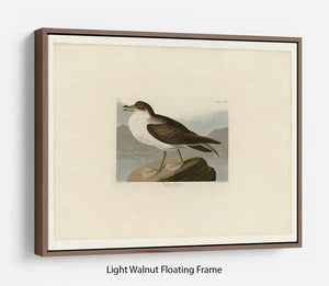 Wandering Shearwater by Audubon Floating Frame Canvas - Canvas Art Rocks 7