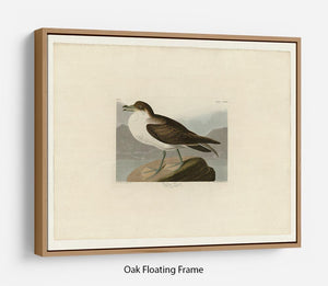 Wandering Shearwater by Audubon Floating Frame Canvas - Canvas Art Rocks - 9