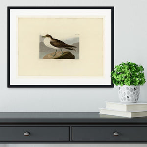 Wandering Shearwater by Audubon Framed Print - Canvas Art Rocks - 1