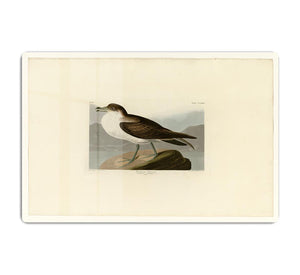 Wandering Shearwater by Audubon HD Metal Print - Canvas Art Rocks - 1