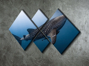 Whale Shark very near 4 Square Multi Panel Canvas  - Canvas Art Rocks - 2