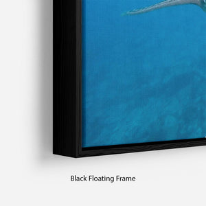 Whale shark Floating Frame Canvas