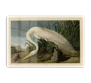 White Heron by Audubon HD Metal Print - Canvas Art Rocks - 1