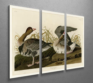 White fronted Goose by Audubon 3 Split Panel Canvas Print - Canvas Art Rocks - 2