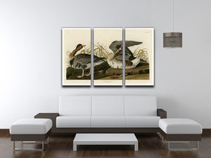 White fronted Goose by Audubon 3 Split Panel Canvas Print - Canvas Art Rocks - 3